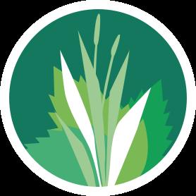 Icon mit Wiesenpflanzen